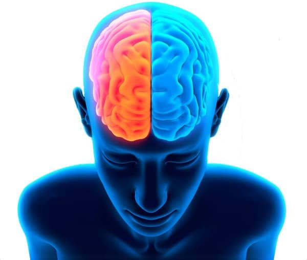 neurowebdesign-brain